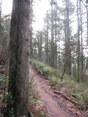 An Arboretum Trail