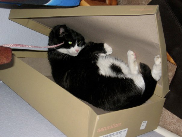 Martini Playing in a Shoebox