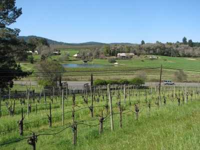 View of the Vineyards at Handley Cellars