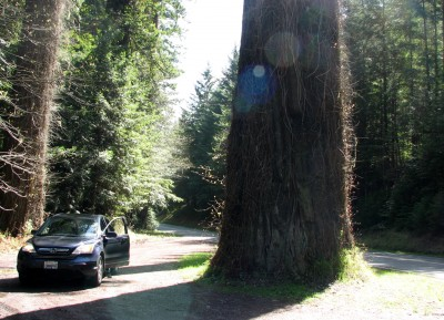 Our Honda Posing With a Redwood Tree - Avenue of the Giants.  These Trees are Huge!