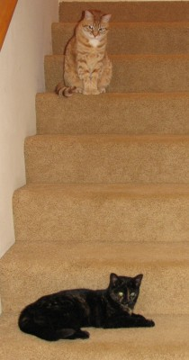 Oliver Is Definitely Not Going Down Those Stairs!