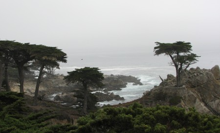 The Lone Cypress Isn't Really As Lonely As They Make It Out To Be