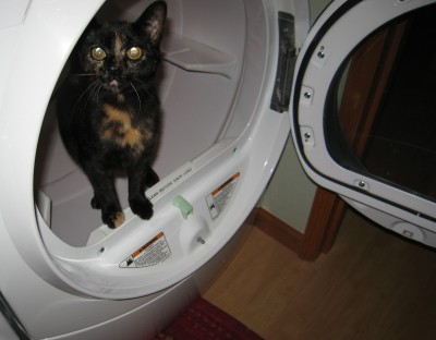 Coraline in the Dryer!