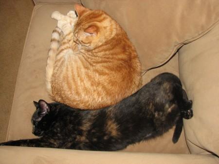 KittenWrap