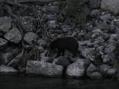 We Saw a Black Bear!
