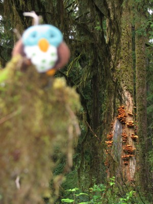 Piddles the Traveling Owl Posing with some of the Hoh's Lichens