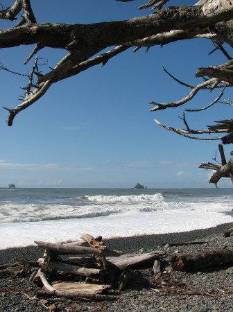 Someone Built a Driftwood Fort at Rialto Beach