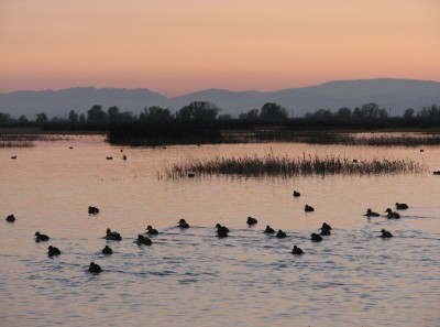 Farewell from the Sacramento National Wildlife Refuge