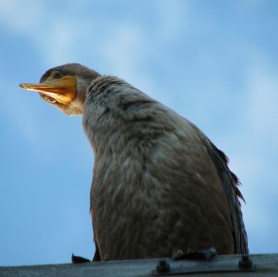 A bird perched near the Manistee Pierhead Light