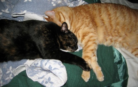 Oliver and Coraline Snuggling – Don't they look happy holding hands?