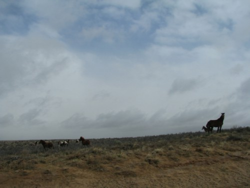 Wild Horses on the Road to Chaco Culture National Historical Park