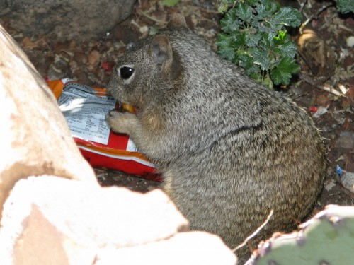 This is what happens when other people feed the squirrels – you get crazy, aggro squirrel bandits!
