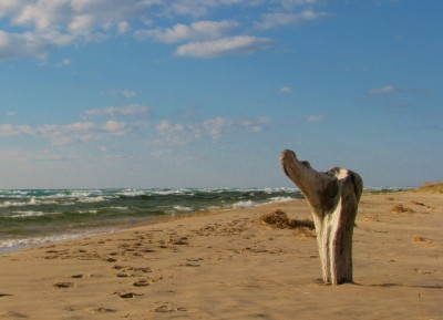 An interestingly positioned chunk of driftwood on Lake Michigan