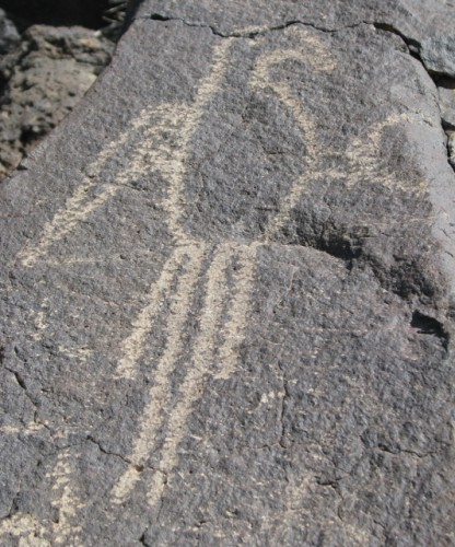 A macaw petroglyph – the Puebloan people had extensive trade networks