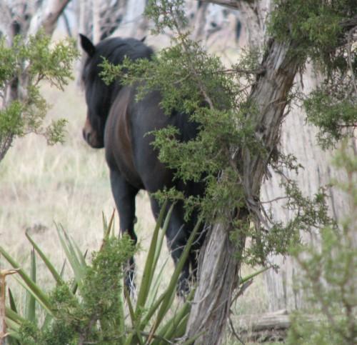 Mesa-Verde-Horse (640x618)