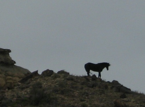 The Beautiful Wild Horse we saw on the Navajo Reservation