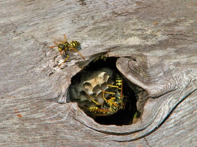 Even wasps make their home on the Refuge