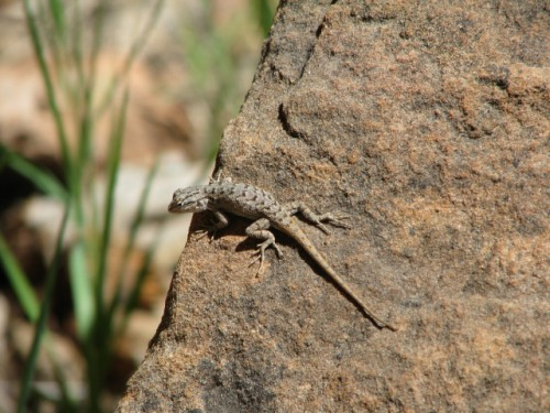 Who Could Resist this Little Guy on the Angel's Landing Trail?