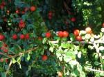 Ohme Gardens (11) (640x480)