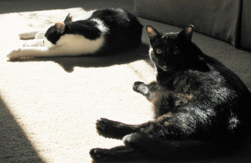 Oscar (left) and Coraline (right) taking in some rays