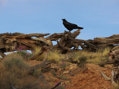 A raven keeping watch at the Neck Spring Trail Head.