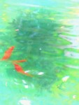 Abstract photo!  Goldfish in a pond at Ohme Gardens.