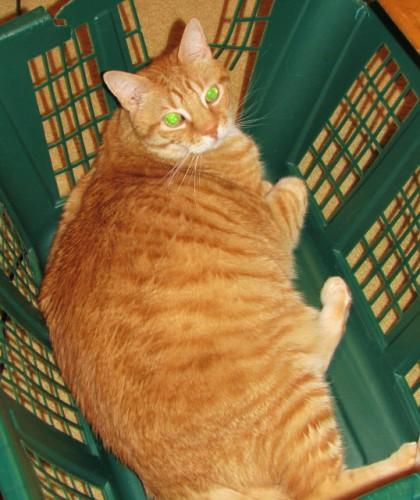 Oliver loves baskets.