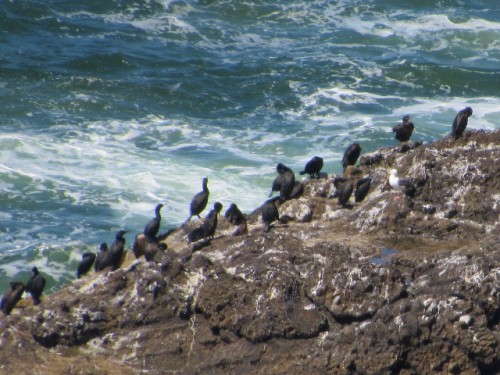 A closer look at a Cormorant colony