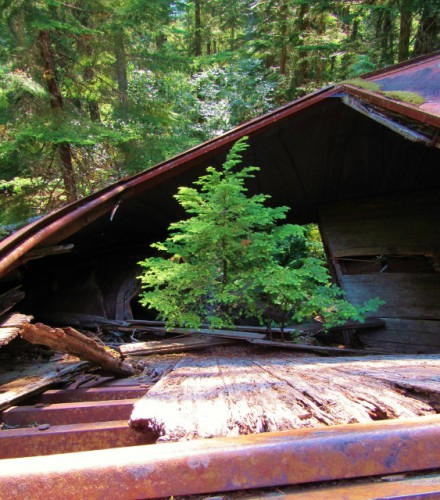 A tree grows in a boxcar.