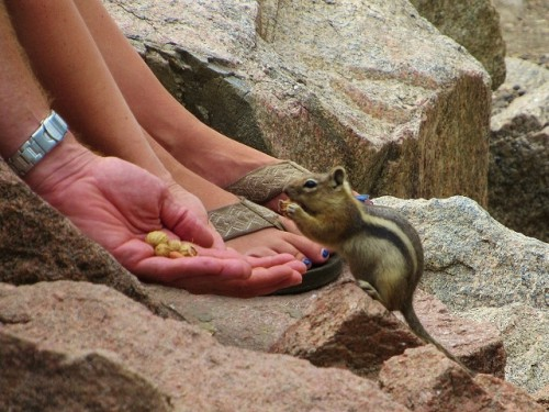 Someone feeding the chipmunks in Estes Park