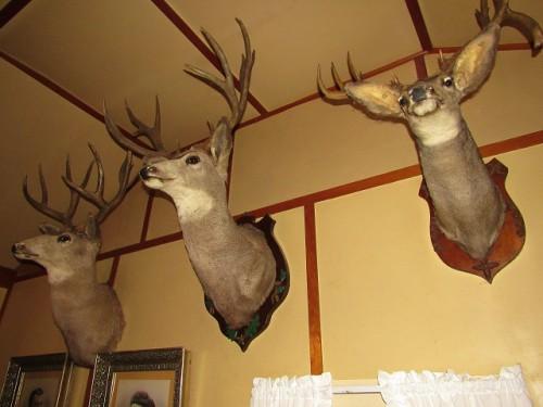 Deer Heads at Mama House
