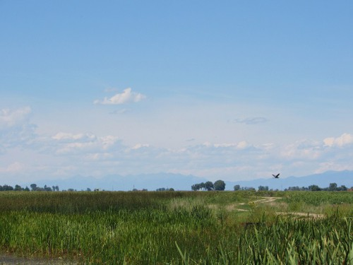 The wetlands at Alamosa National Wildlife Refuge