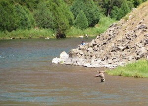 A fly fisherman in the Gunnison River.