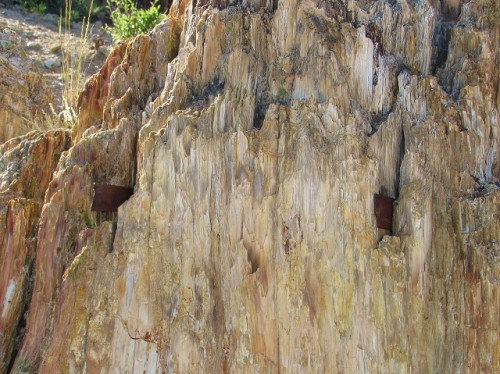 A petrified Redwood stump, with two saws embedded in it.