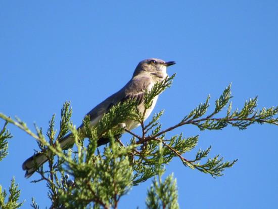 Jamestowne-Bird (640x480)