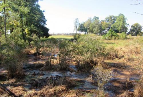 Jamestowne-Swamp
