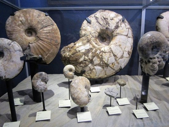 Ammonite Fossils at the NAT - I loved these!