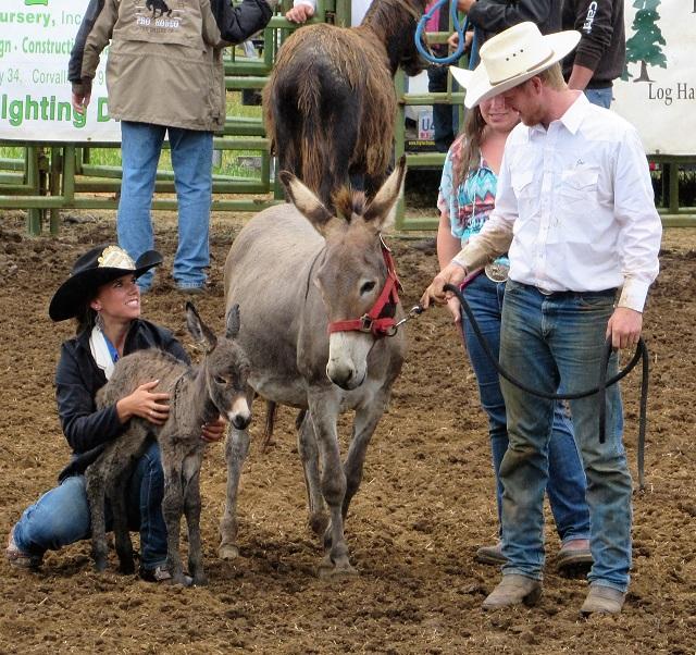 donkey-foal