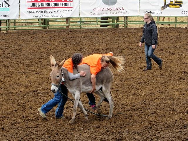 donkey-race