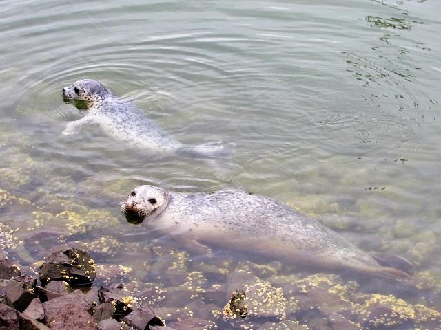 marina-seals