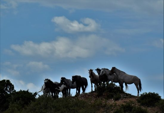 Wild horses on the hill
