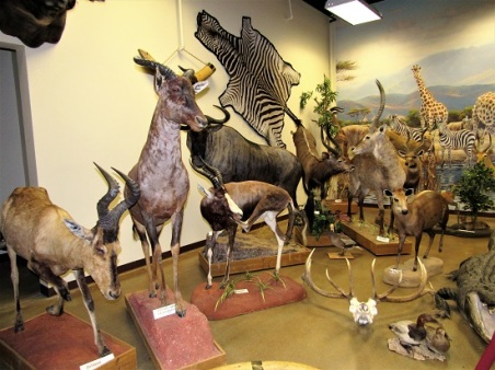 All kinds of antelope...