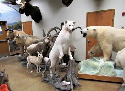 Arctic Wolf and Polar Bear