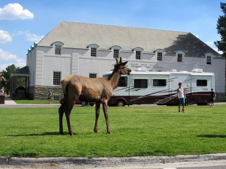 Tourists getting too close to the elk