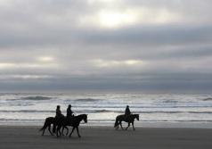 Horses on the beach at Fort Stevens