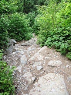 A section of the trail near the top