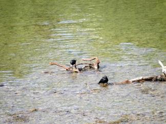 Birds-Snake River