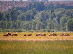 Elk Butts!
