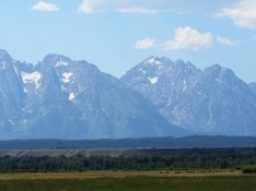 Grand Tetons with Elk in the foreground