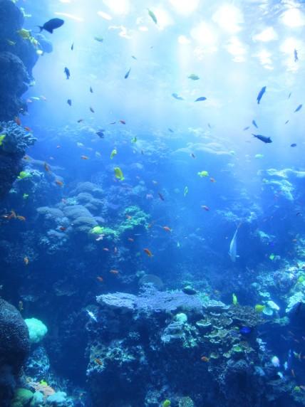 Georgia-Aquarium-Coral-Reef